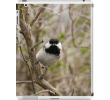 Black Capped Chickadee - Mud Lake, Ottawa, Ontario iPad Case/Skin
