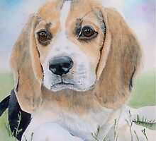 Junior the Beagle Pup by Yvonne Carter