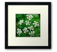 Delicate Whiteness Framed Print