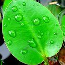 Raindrops On Leaf by Sandra Moore