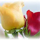 Rose Queens by Kathy Bucari