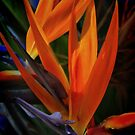 Tropical Color2 by Barbara  Brown