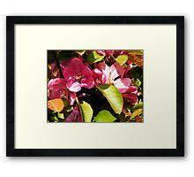 Cherry blossom-2 Framed Print