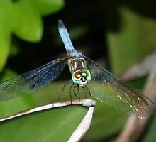 Mixed-eye color dragonfly by ♥⊱ B. Randi Bailey