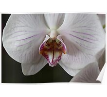 Open Wide Orchid Poster