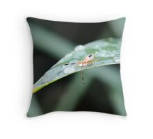 MORNING DUE Throw Pillow