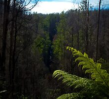 Keppel Falls Lookout. by Daniel Berends