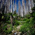 Lady Talbot dr, Marysville by Daniel Berends