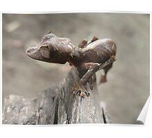 Baby Dragon / Uroplatus ebenaui Poster