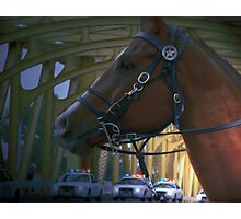 Police Horse and Cars Photographic Print