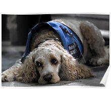 Service dog Poster