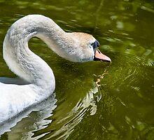 Swan Lake by Jonathan Fletcher