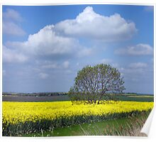 Amongst the rapeseed Poster