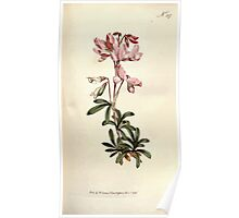 The Botanical magazine, or, Flower garden displayed by William Curtis V9 V10 1795 1796 0064 Pmpmos Fruticosa Shrubby Rest Harrow Poster