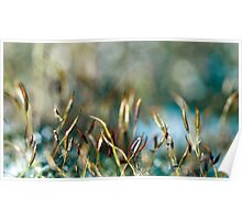 Moss abstract Poster