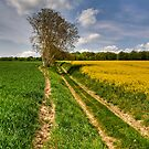 Tree in the fields by Jean-Pierre Ducondi