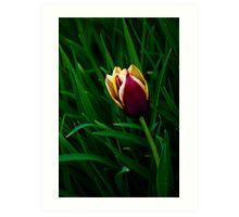 Tulip at Dusk Art Print