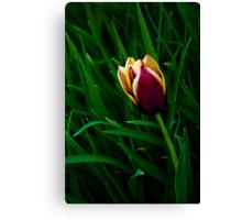 Tulip at Dusk Canvas Print