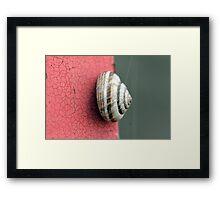 red shell Framed Print