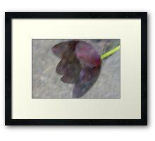 Tulip & Cement Framed Print