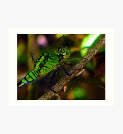 i say mosquito hawk, you say dragonfly Art Print