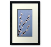 P is for Pussy-Willow Framed Print