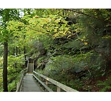 Along a trail at Mill Creek Park Photographic Print