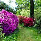 A Colourful Garden Walk by hootonles