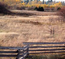 Fenced In  by Ethna Gillespie