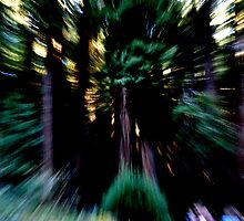 speed of light. by Amanda Huggins
