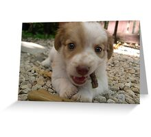 Puppy Timmy Greeting Card