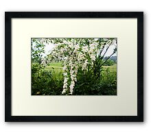 Country life - blooms of wild flowers along the fence Framed Print