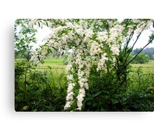 Country life - blooms of wild flowers along the fence Canvas Print