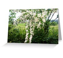 Country life - blooms of wild flowers along the fence Greeting Card