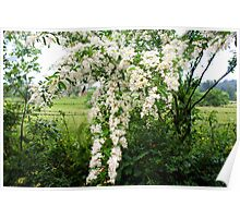Country life - blooms of wild flowers along the fence Poster