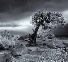 Mystery Tree at Dead Horse Point by Vincent James