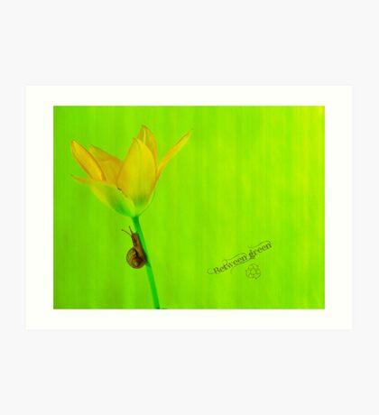 Between green Art Print
