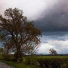 Before The Rain by Lynne Morris