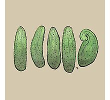 Cucumbers on brown Photographic Print