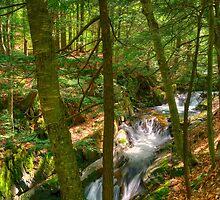 Honey Hollow Falls by Mandy Wiltse