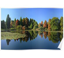 Bedgebury Pinetum during the Autumn. Poster