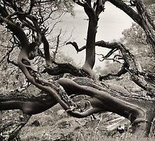 Scrub Tree - Hetch Hetchy Resevoir by keelanj