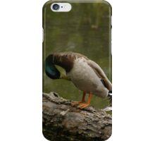 Waterfowl, Mud Lake, Ottawa, Ontario iPhone Case/Skin