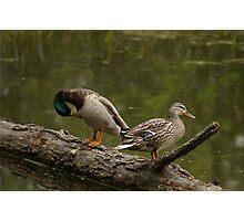 Waterfowl, Mud Lake, Ottawa, Ontario Photographic Print
