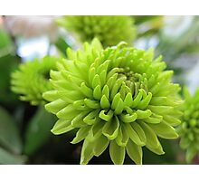 ~ Gorgeous Greens ~ Photographic Print