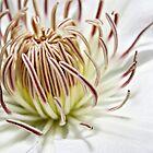White Flower by OsirisPQ