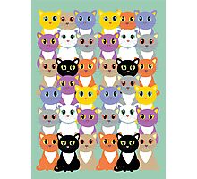 Only A Glaring Of Cats Photographic Print