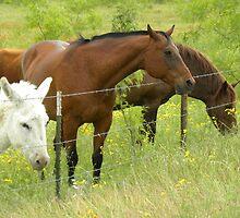 Quarter Horses in Pasture by BrigitteinTexas