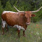 Texas Longhorn  by BrigitteinTexas