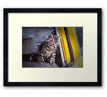 Grey Kitty Cat Car Window Framed Print